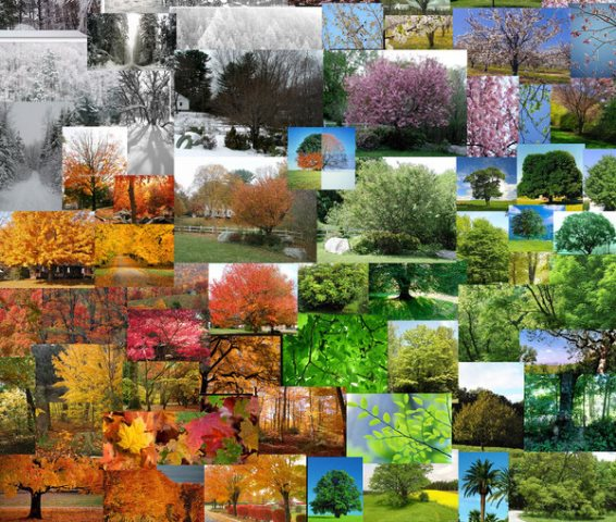 tree_seasons_collage_by_jkotlan edited