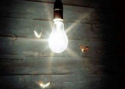 Bugs-around-bulb