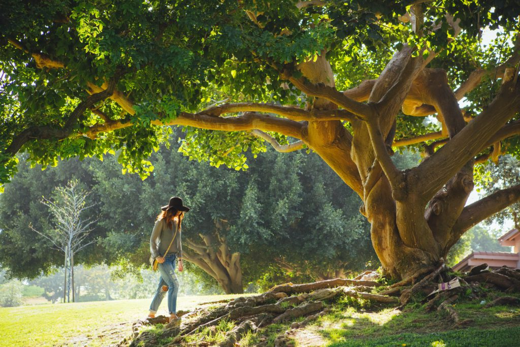 a slow walk of trees essay From a slow walk of trees by toni morrison 6 in the essay mother tongue, amy tan describes several encounters she and her mother had with individials and.